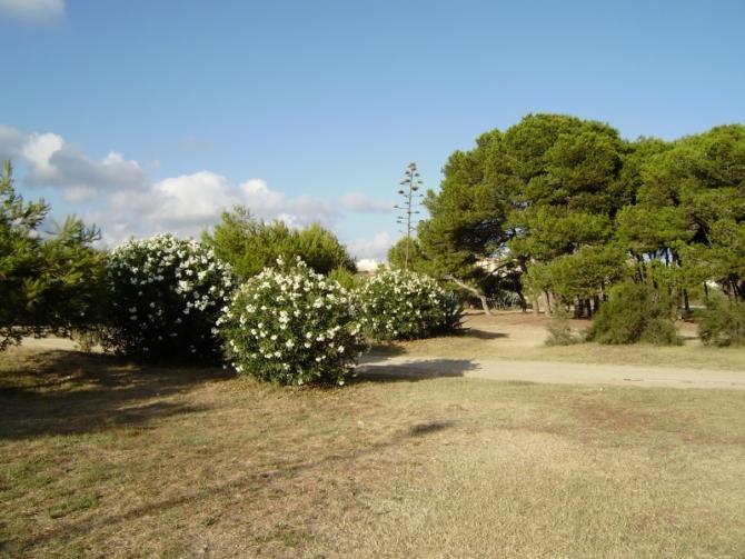 Zona Pícnic de Cubelles