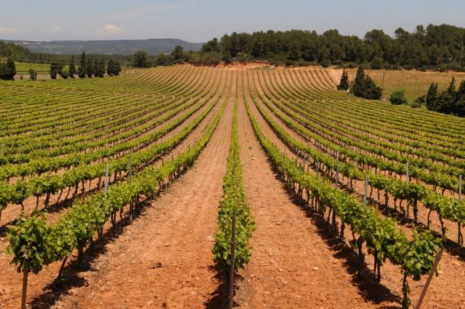 Castell Riudabella Vineyards