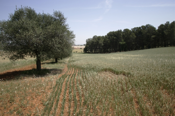 Parc Agrari de Sabadell