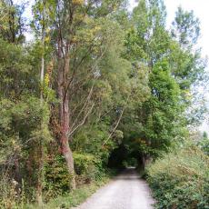 La Guinueta - Camins de muntanya