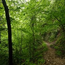Camí de l'Obaga, Berga