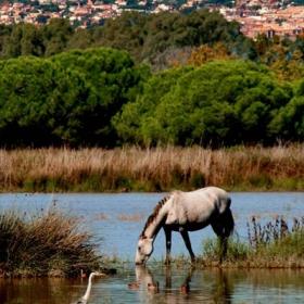 Viladecans - El Remolar