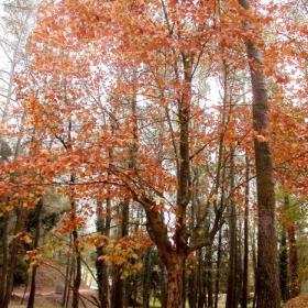 Sant Esteve Sesrovires - Parc Canals i Nubiola