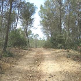 Bosc Can Corbera